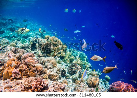Reef with a variety of hard and soft corals and tropical fish. - stock photo