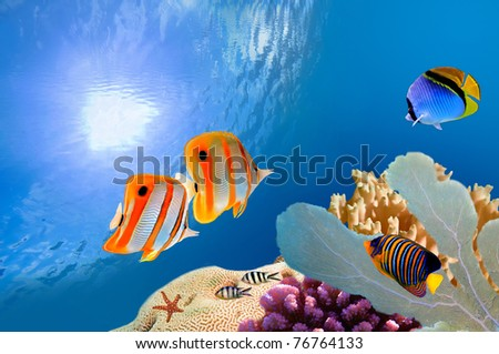 Reef with a variety of hard and soft corals and tropical fish - stock photo