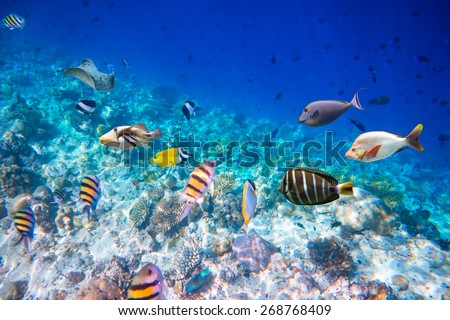 Reef with a variety of hard and soft corals and tropical fish.Maldives - Ocean coral reef. Warning - authentic shooting underwater in challenging conditions. A little bit grain and maybe blurred. - stock photo