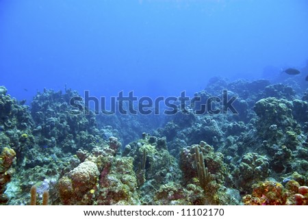 reef with colorful varieties of coral and sponges in blue caribbean sea water near roatan honduras - stock photo