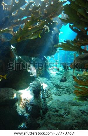 reef with sun beam - stock photo