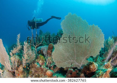 Reefscape and Corals, Grand Cayman