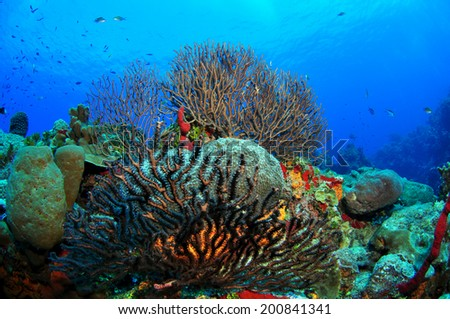 Reefscape with Gorgonian Sea Fans, Grand Cayman - stock photo