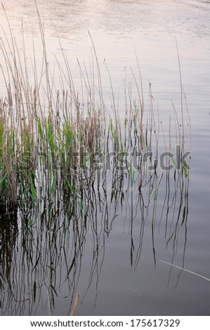Reflected grass - stock photo