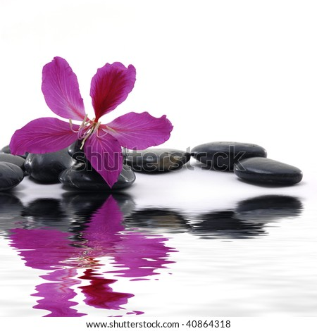 Reflection for black pebbles with beauty red flower