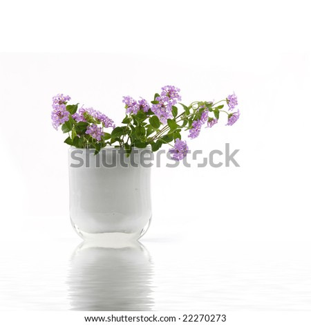 Reflection for vase of small pink flowers - stock photo