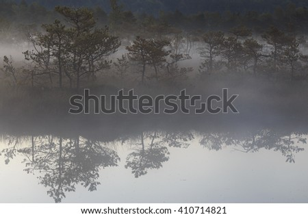 Reflection in the summer misty bog water - stock photo