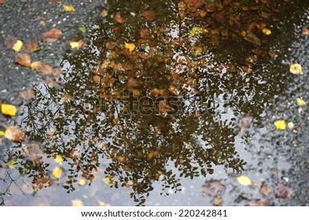 Reflection in water. Golden autumn in park. - stock photo