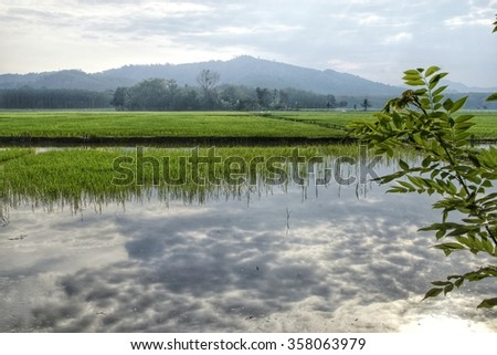 Reflection of cloudy sky on a partially seeded paddy field with misty mountains at the background.