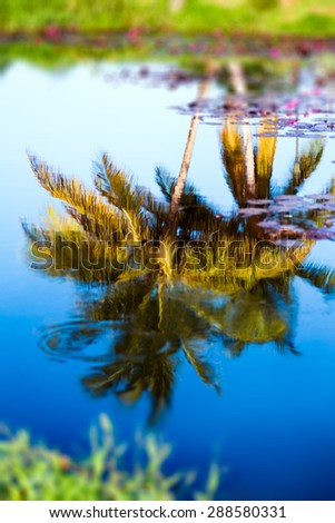 Reflection of coconut trees on tropical pond water Tobago - stock photo