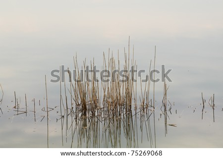 Reflection of dry grass in the water - stock photo