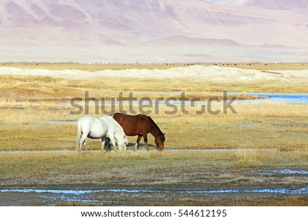 Reflection of horse eating grass and water on lake of Western Mongolia. Natural background