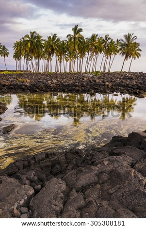 Reflection of palm trees on a tropical  volcanic coastline - stock photo