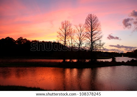 Reflection of pine trees in the lake