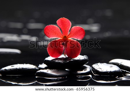 reflection of red orchid with green fern - stock photo