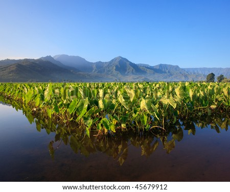 Reflection of Taro plants in Hanalei valley on Kauai with the Na Pali mountains in the background - stock photo