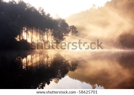 Reflection Of The Winter Wild - stock photo