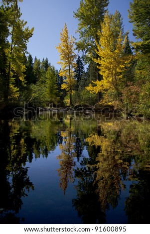 Reflection of timber and aspens, Fall, South Lake Tahoe, California
