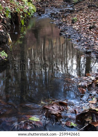 Reflection of trees in the creek. Forest stream in autumn. Fallen leaves. Reflection in water. fall. Spring. Winter forest. - stock photo