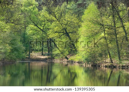 reflection of trees in the pond at the afternoon - stock photo