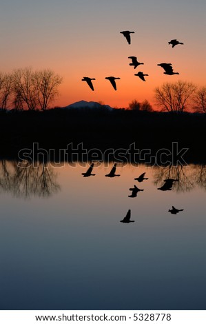 Reflection of Winter Evening Geese Flying over Wildlife Pond, San Joaquin Delta, California Flyway - stock photo
