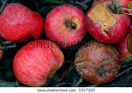 Reflection on life cycle - apples left into grass - stock photo