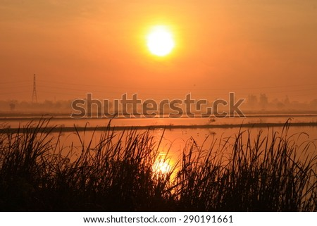 reflection sunset on rice field - stock photo