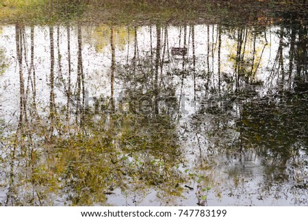 reflection tree on pond