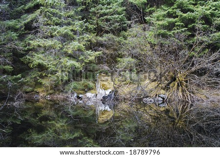 Reflections of a forest in Mendenhall Glacier national park (Juneau, Alaska). - stock photo