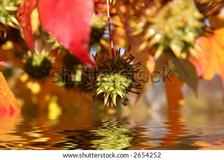Reflections of fall in water - stock photo