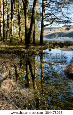 Reflections of trees in a woodland forest by the lake at Derwentwater, Keswick, Lake District, UK.