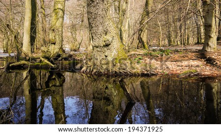 reflections of trees in the Jasmund National Park at the Island of Ruegen in Germany