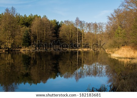 reflections of trees on a pond in Germany
