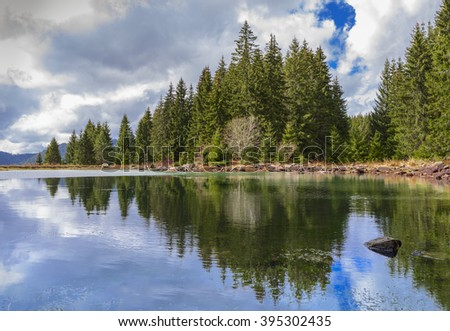 Reflections on the Coniferous Forest in a Lake