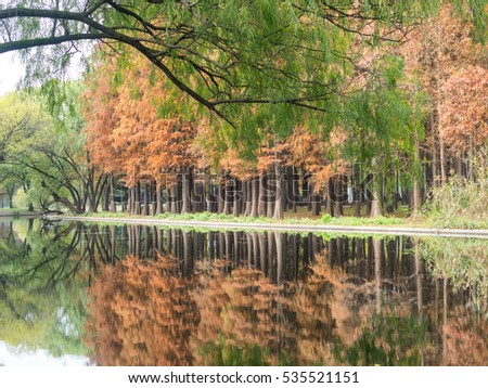 Reflections series, beautiful autumn landscape, tree reflected in lake, seasons change, sunny day, autumnal park, fall nature.