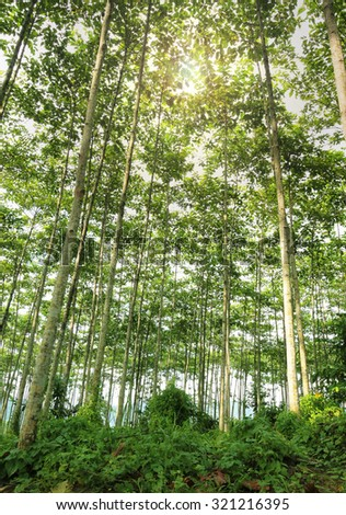 Reforestation for sustainable development, adding ozone to the world.