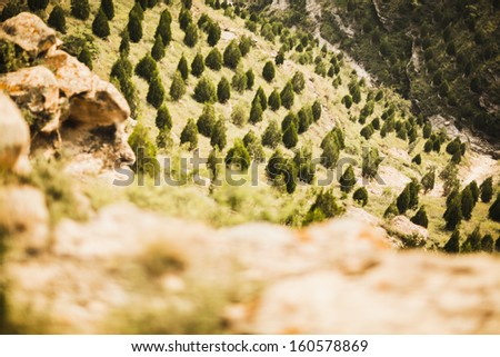 Reforested areas in the mountains - stock photo