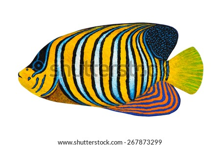 Regal Angelfish original acrylic Painting isolated on white background - stock photo