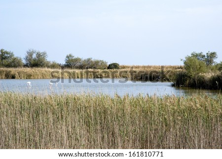 Regional Nature Park of the Camargue, France - stock photo