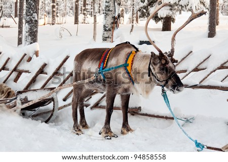 reindeer and sleigh in winter forest - stock photo