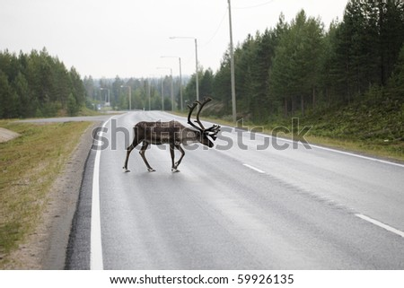 Reindeer crosses a road at dusk.