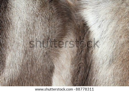 Reindeer fur background texture. Natural material abstract. - stock photo