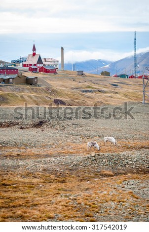 Reindeer in front of church in Longyearbyen, Svalbard, Arctic - stock photo