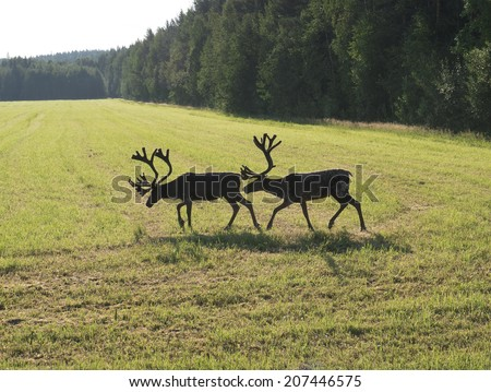Reindeer on swedish fjeld - stock photo