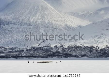 reindeer See Akkajaure - stock photo