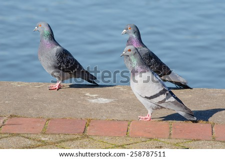 relaxed city pigeons - stock photo