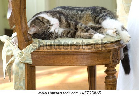 Relaxing kitty on a chair - stock photo