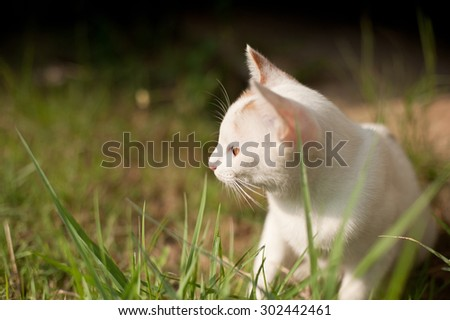 relaxing sitting cat white on grass, sunny spring day, cute funny