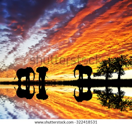 released elephants walking by the lake - stock photo
