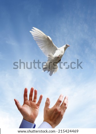 Releasing a white dove into the air concept for freedom, peace and spirituality - stock photo